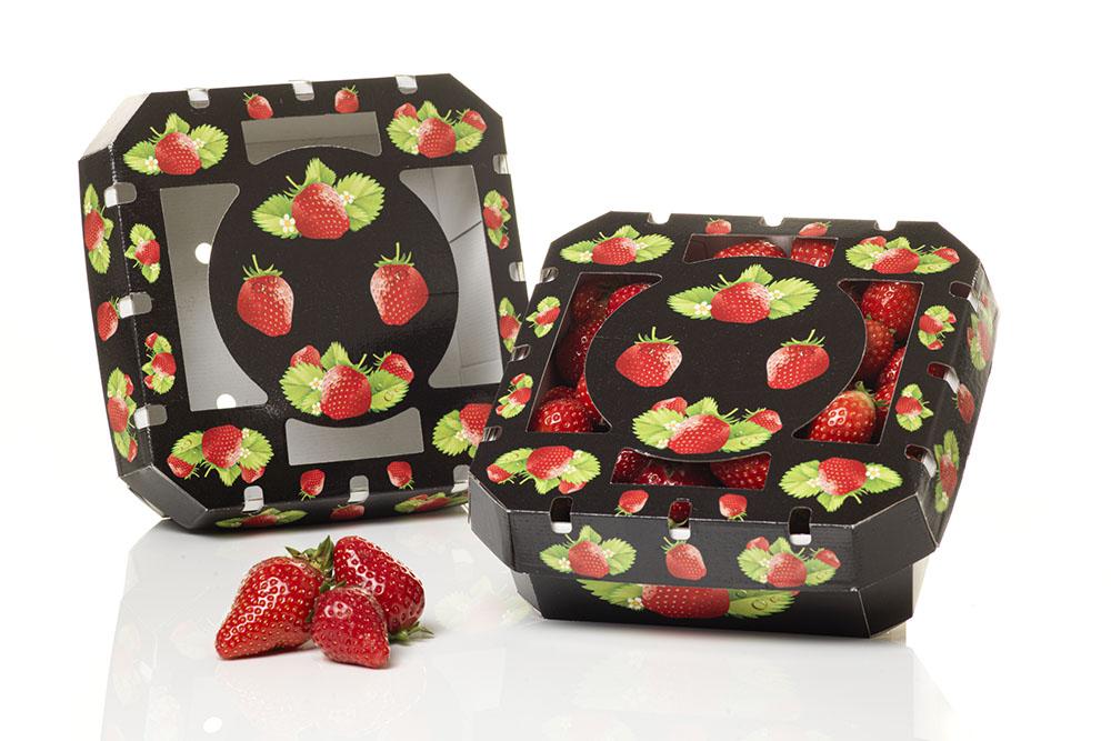 saica-fruta